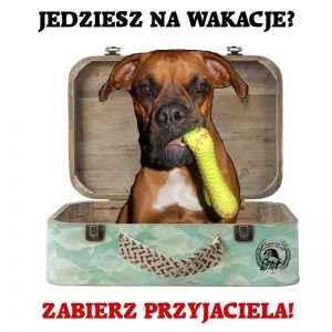 Zabierz psa na wakacje