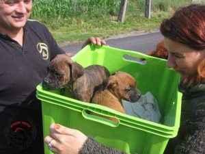Szczeniaki odebrane 21.062014 przez Fioletowy Pies