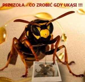 Gdy ukąsi pszczoła